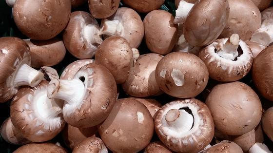 Много грибов шампиньонов