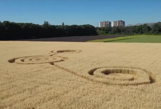 Загадочные узоры на пшеничном поле появились в Воронеже
