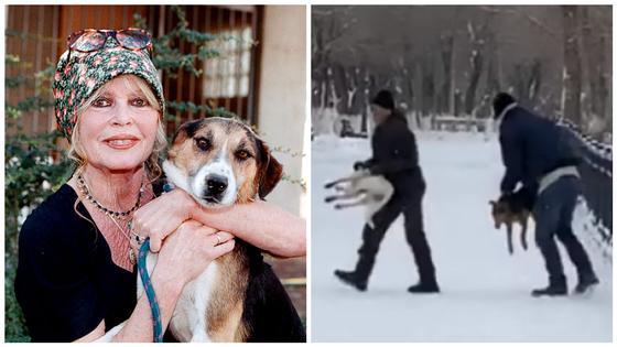 Фонд Бриджит Бардо отреагировал на отстрел собак в Караганде