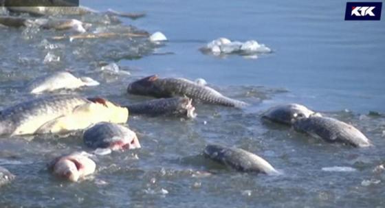 Мертвая рыба всплыла на Урале после потепления