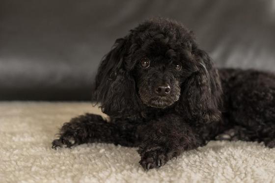 Породы маленьких собак: названия, описания, фото