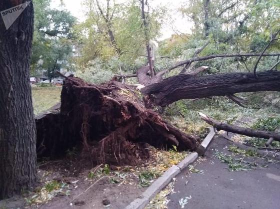 Сносил машины и валил деревья: как устраняют последствия урагана в СКО (фото, видео)