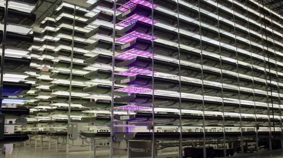 Вертикальное земледелие. Пример организации пространства