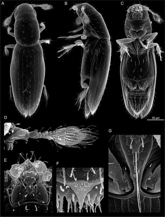 Жесткокрылое насекомое под микроскопом