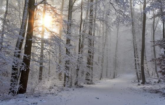 Снег в лесу