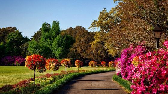 Сад с ухоженными деревьями и цветущими кустарниками