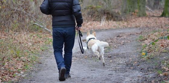 Собаки загрызли ребенка в Алматы: какие правила обязаны соблюдать собаководы в Казахстане