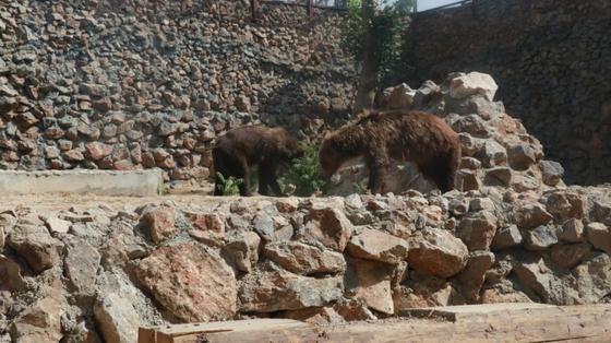 Шымкент қаласының мәдениет, тілдерді дамыту және архивтер басқармасы