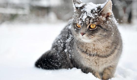 Погода на 3 дня: метели и снегопады ожидаются в Казахстане