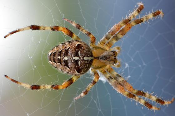 У женщины образовалась дыра в руке из-за укуса паука