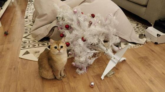 15 новогодних и рождественских фейлов