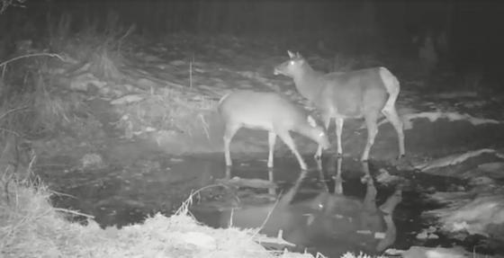 Несколько видов диких животных засняли в ВКО (фото, видео)
