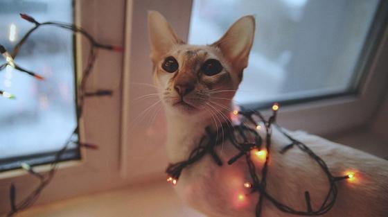Эксперты рассказали, как не напугать животных новогодним салютом