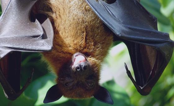 Коронавирус: от какого животного заразился первый пациент?