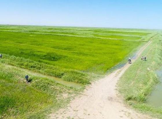 В Кызылординской области планируют увеличить объем орошаемых земель до 332 тысяч гектаров