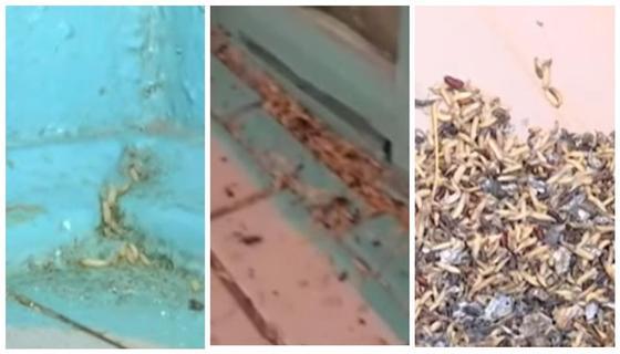 Сыпятся с потолка: на трупных червей пожаловались жители Костаная