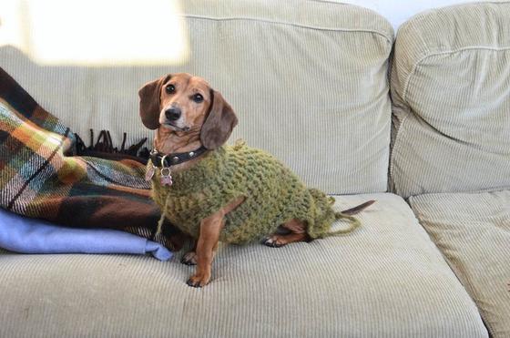 Собака в вязаной одежде на светлом диване