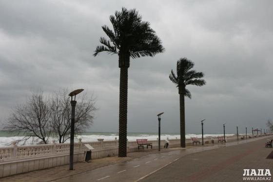 Вандалы добрались до новых пальм на набережной Актау (фото)