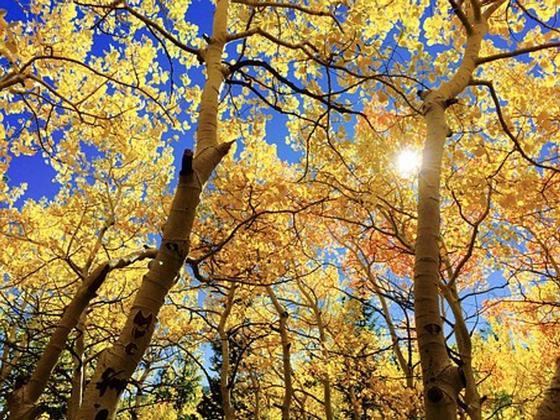 Какой сегодня праздник: календарь праздников на 6 октября