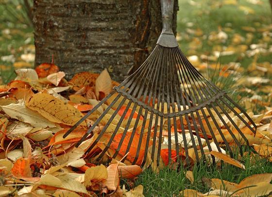 Уборка листьев в саду