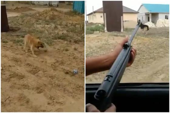 Двое мужчин стреляли по собакам близ Атырау (видео)