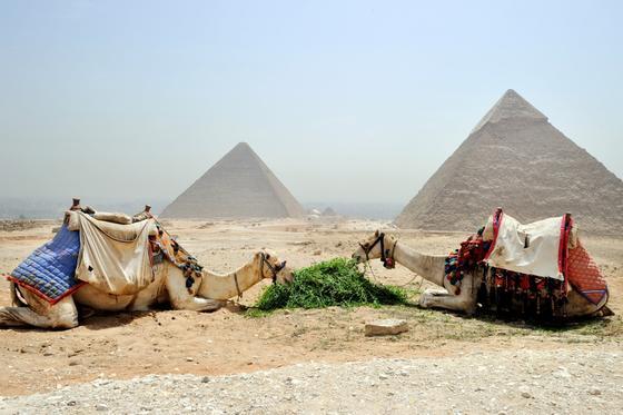 Верблюды возле пирамид в Египте