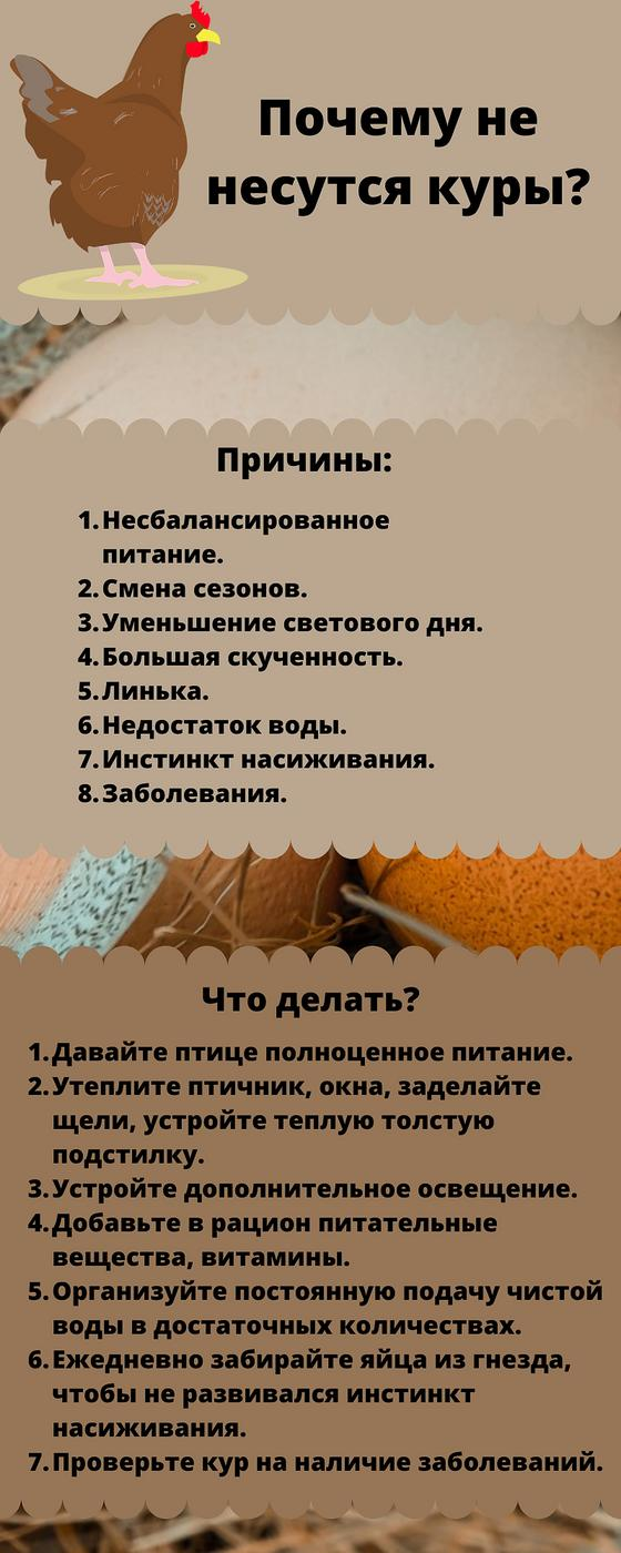 Инфографика «Почему не несутся куры»