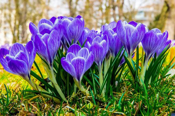 Какой сегодня праздник в мире и Казахстане: 1 марта