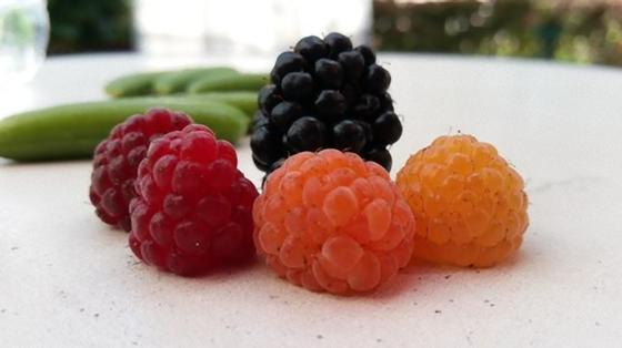 Разноцветные ягоды малины на столе