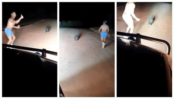 В Австралии полицейский бросал камни в вомбата. Полиция расследует этот инцидент