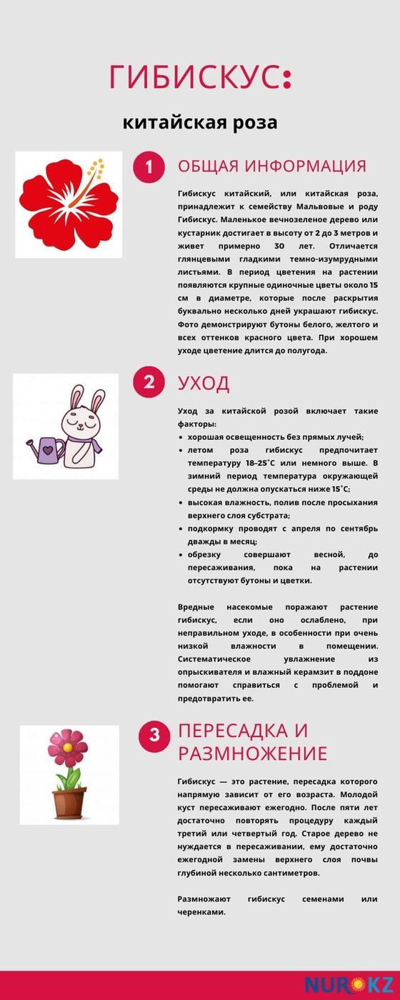 Гибискус инфографика