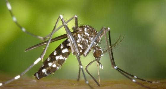 Ученые нашли музыку, которая отпугивает комаров
