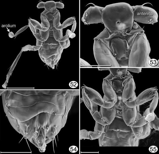Насекомое-паразит под микроскопом