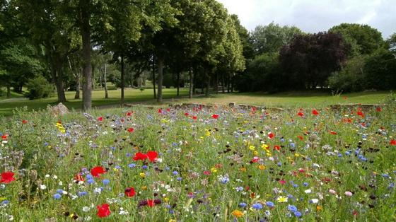 Газон с цветущими полевыми цветами