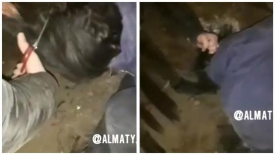 Видео жестокого избиения девушки сверстницами потрясло пользователей Сети