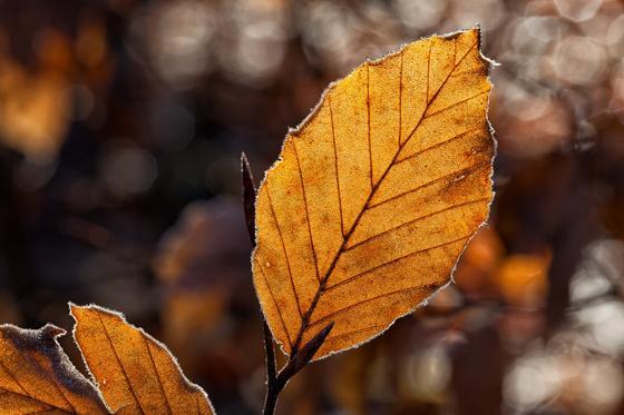 Лист осень