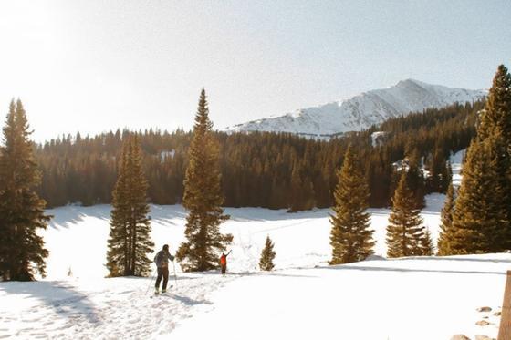 Лыжники в лесу на фоне гор