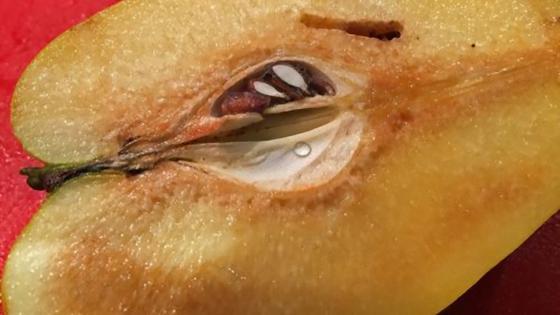 Половинка плода айвы с косточками