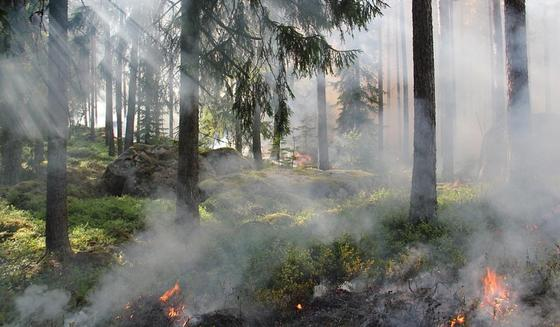 Режим ЧС объявлен из-за пожара в Каркаралинском районе Карагандинской области