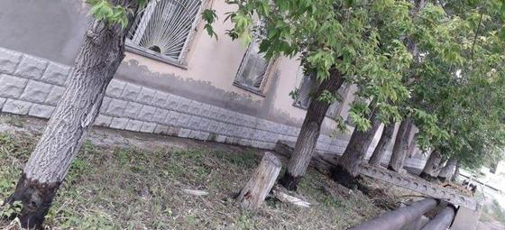 Неизвестные поливают деревья бензином в Караганде