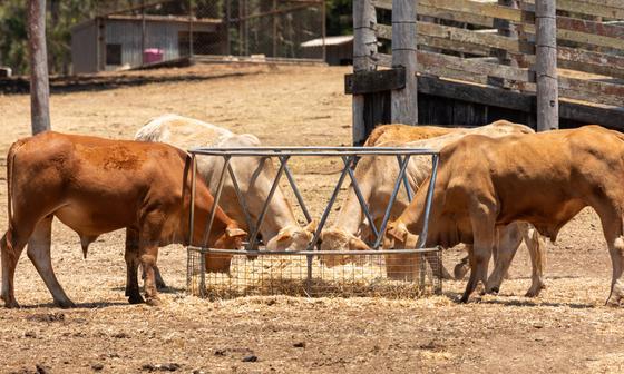 Забой скота в специально отведенных местах на Курбан айт запретили в Нур-Султане