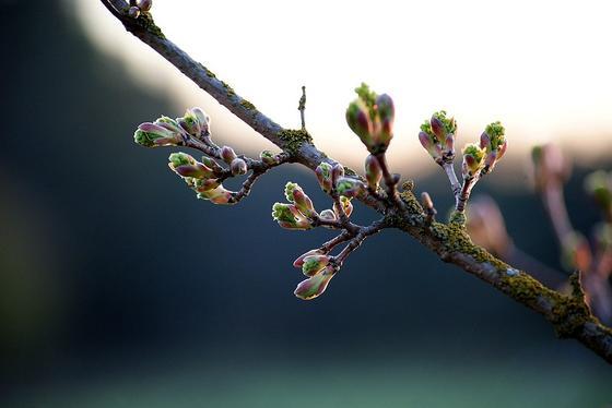 Какой сегодня праздник: календарь праздников на 30 марта