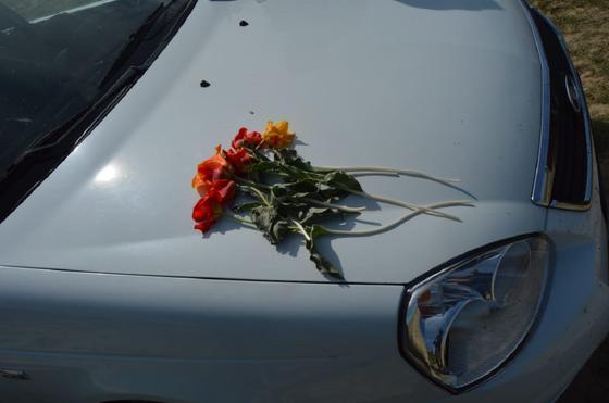 Тюльпаны в Туркестанской области
