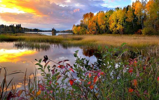 Река, осенний лес