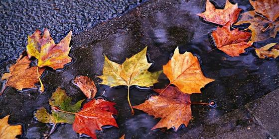 Көрнекі сурет: pixabay.com