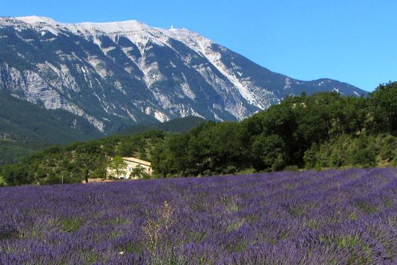 Лаванда и горы