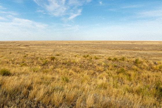 Казахстанская степь