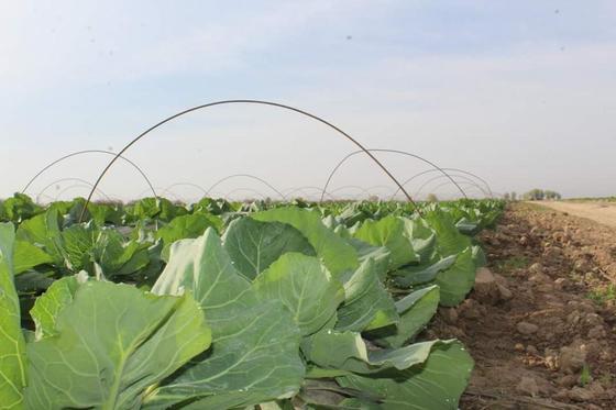 Посевная площадь в Туркестанской области в этом году составит более 800 тыс. га