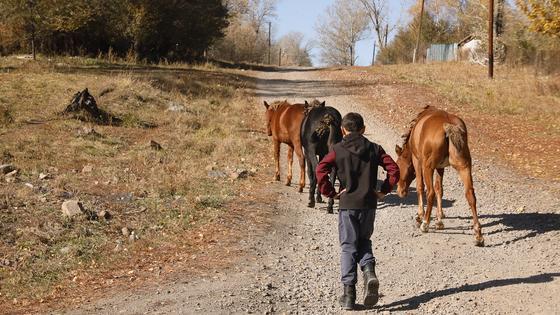 Мальчик пасет лошадей