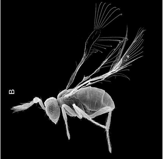 Насекомое с крыльями и усиками под микроскопом